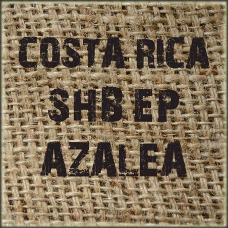 Costa Rica SHB EP Azalea (West Valley)